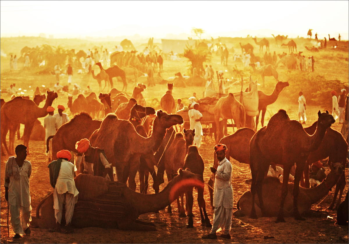 Camel fair Pushkar, tour avventura India